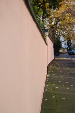 pink_wall_and_yellow_leaves